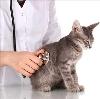 Ветеринарные клиники в Большевике